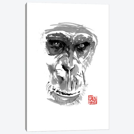 Chimpanzee Canvas Print #PCN30} by Péchane Canvas Wall Art