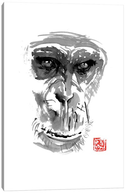 Chimpanzee Canvas Art Print