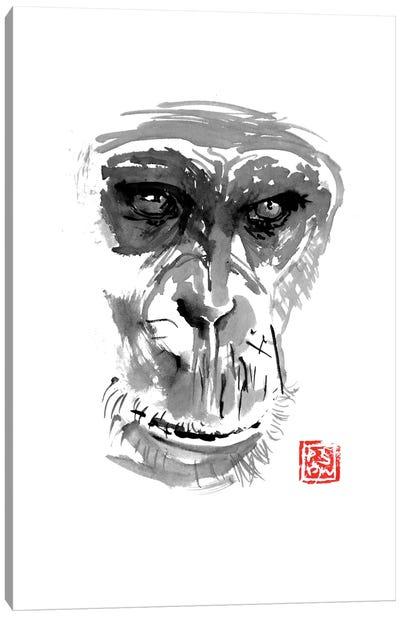 Chimpanzee Canvas Art Print