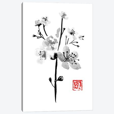 Sakura Canvas Print #PCN351} by Péchane Art Print