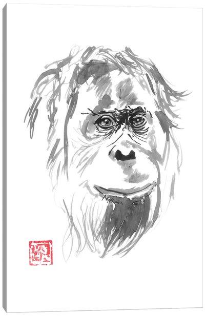 Orangutan Smile Canvas Art Print