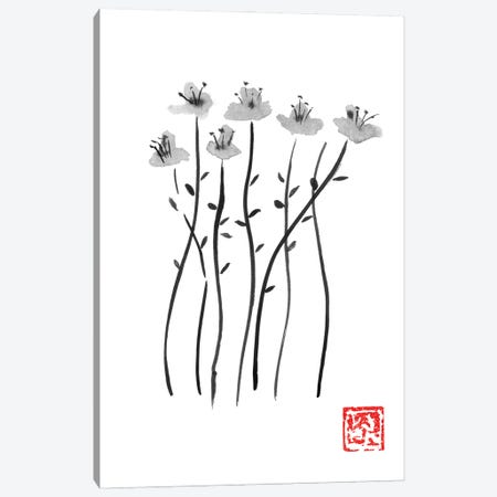 Sakura Lines Canvas Print #PCN372} by Péchane Art Print