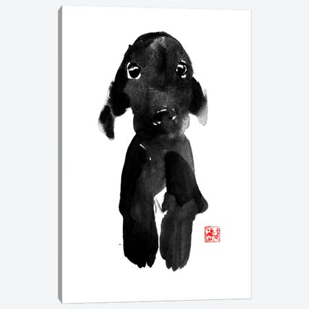Cute Dog Canvas Print #PCN40} by Péchane Canvas Print