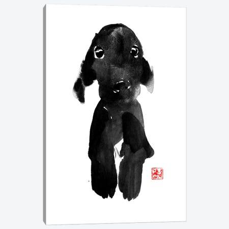 Cute Dog Canvas Print #PCN40} by Péchane Canvas Print