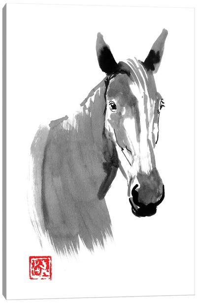 Horse Head Canvas Art Print