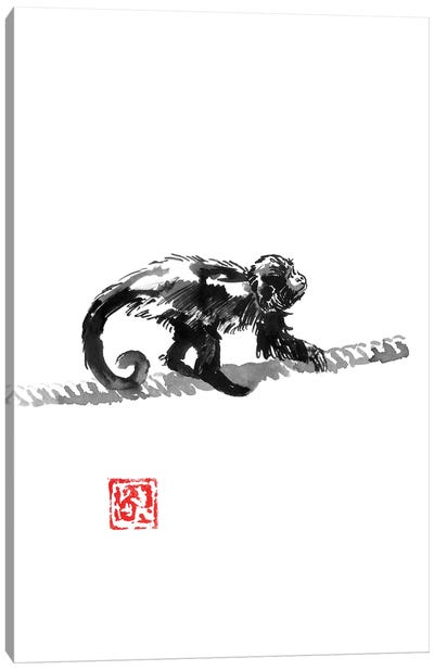 Monkey On The Rope Canvas Art Print