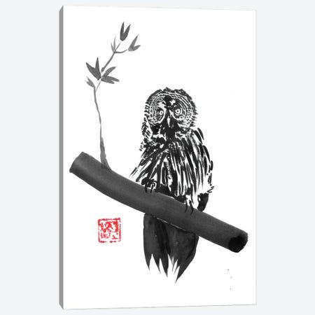 Owl Canvas Print #PCN422} by Péchane Canvas Art Print