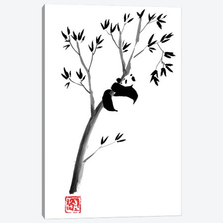 Panda In The Tree Canvas Print #PCN424} by Péchane Canvas Artwork