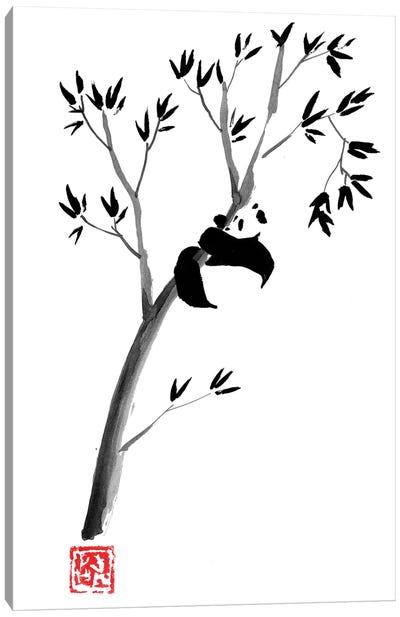 Panda In The Tree Canvas Art Print