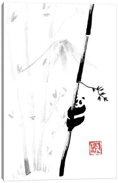 Panda In The Tree III Canvas Art Print