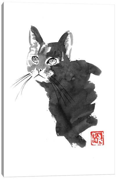 Staring Cat Canvas Art Print