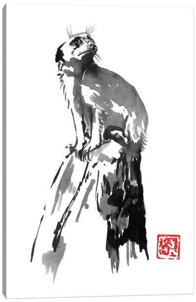 Surikat Canvas Art Print