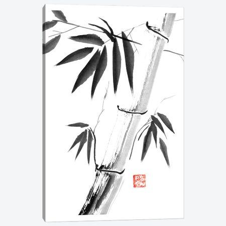 Bamboos Canvas Print #PCN452} by Péchane Canvas Wall Art