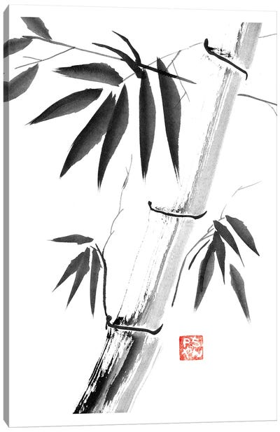 Bamboos Canvas Art Print