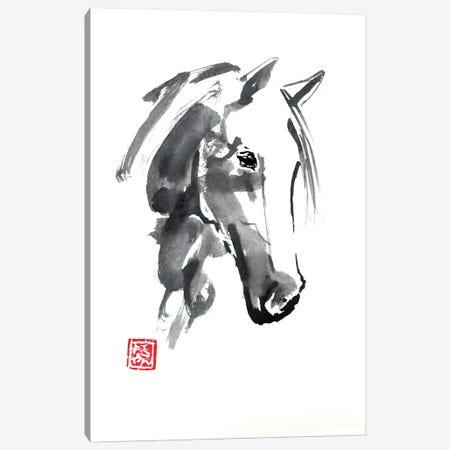 Horse Head Canvas Print #PCN81} by Péchane Canvas Print