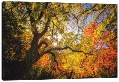 Chinese Pistachio Autumn Canvas Art Print