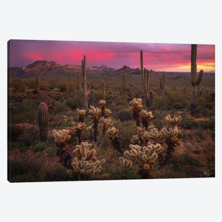 Dance Of The Desert Canvas Print #PCS34} by Peter Coskun Canvas Wall Art