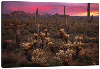 Dance Of The Desert Canvas Art Print