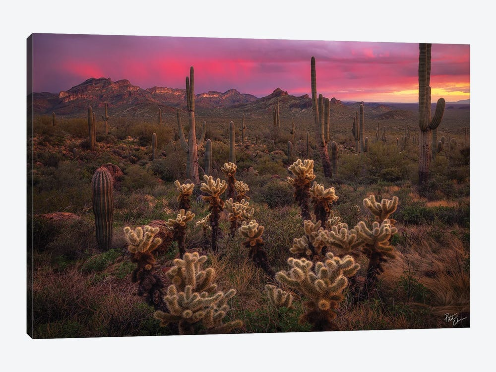 Dance Of The Desert by Peter Coskun 1-piece Canvas Wall Art