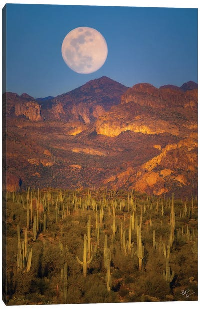 Desert Moonrise Canvas Art Print