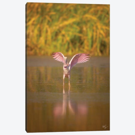 Going Spooning Canvas Print #PCS3} by Peter Coskun Canvas Print