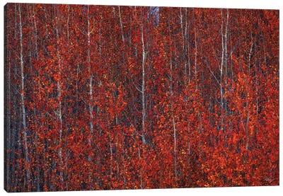 Fire Forest Canvas Art Print