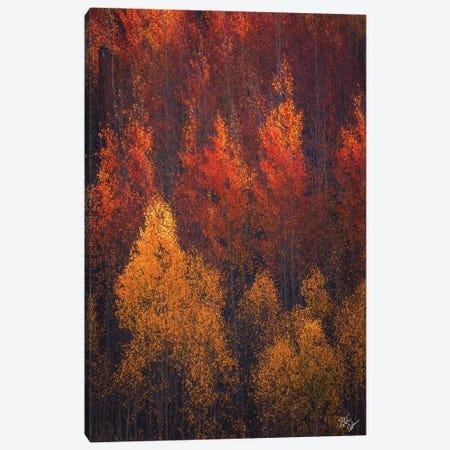 Flames Of Autumn Canvas Print #PCS52} by Peter Coskun Canvas Art Print