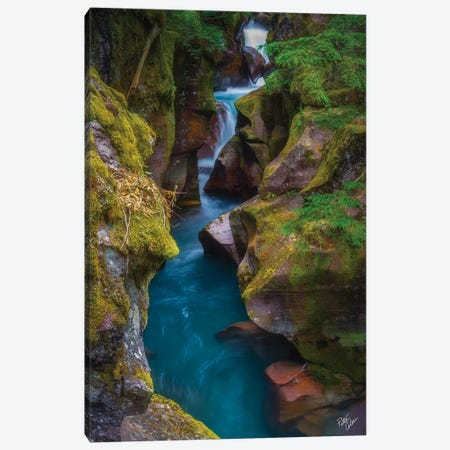 Lime And Teal Canvas Print #PCS65} by Peter Coskun Canvas Print