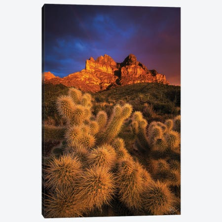 Pickets Gold Canvas Print #PCS84} by Peter Coskun Canvas Print