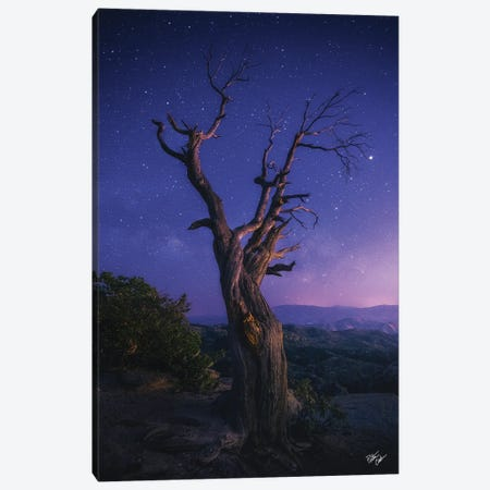 Reaching Further Canvas Print #PCS90} by Peter Coskun Art Print