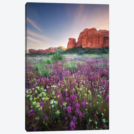 Red Rock Spring Canvas Print #PCS91} by Peter Coskun Art Print