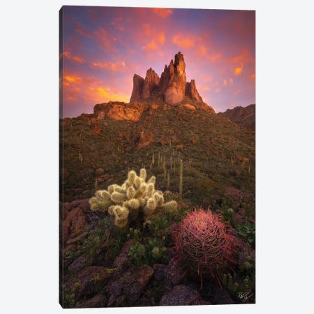 Spike And Barrel II Canvas Print #PCS99} by Peter Coskun Canvas Art Print