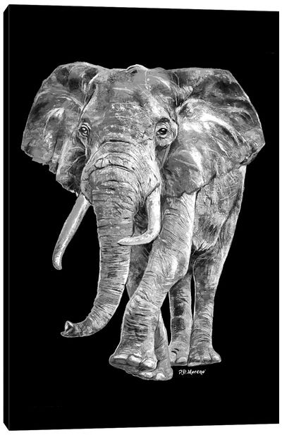 Elephant In Black And White Canvas Art Print