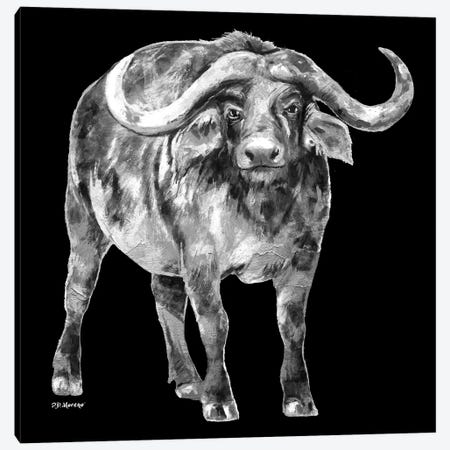 Water Buffalo In Black And White 3-Piece Canvas #PDM73} by P.D. Moreno Canvas Art