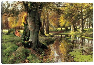 A Woodland Stream Canvas Art Print
