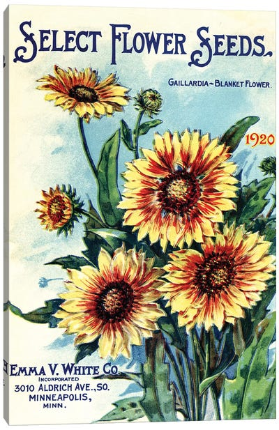 Select Flower Seeds, 1920, from the Andersen Horticultural Library Canvas Art Print