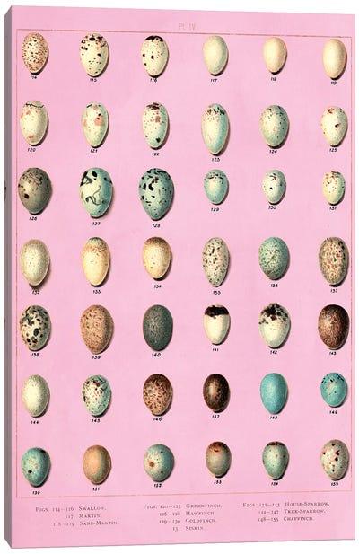 Sparrow and Finch Bird Eggs Canvas Art Print