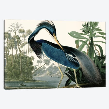 Louisana Heron Canvas Print #PDX155} by Piddix Canvas Art Print