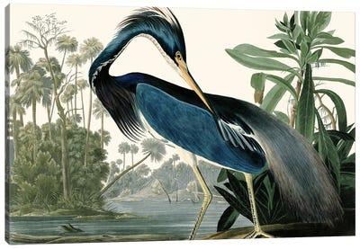 Louisana Heron Canvas Art Print