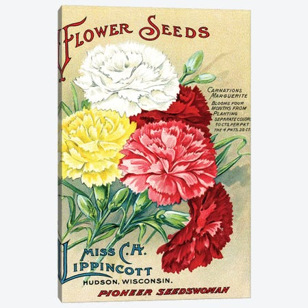 Carnations Marguerite, from the Andersen Horticultural Library Canvas Print #PDX38} by Piddix Canvas Print