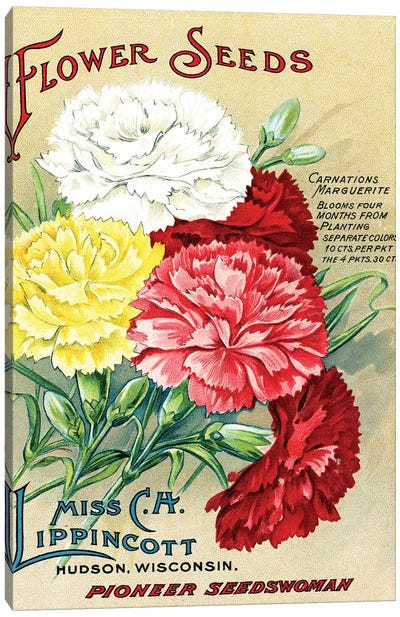 Carnations Marguerite, from the Andersen Horticultural Library Canvas Art Print