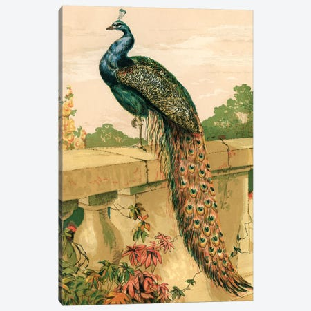 Peacock Canvas Print #PDX94} by Piddix Canvas Artwork