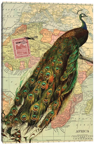Peacock Collage on Map of Africa Canvas Art Print