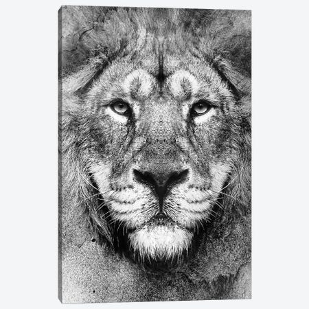 Lion BW II Canvas Print #PEK154} by Riza Peker Canvas Wall Art