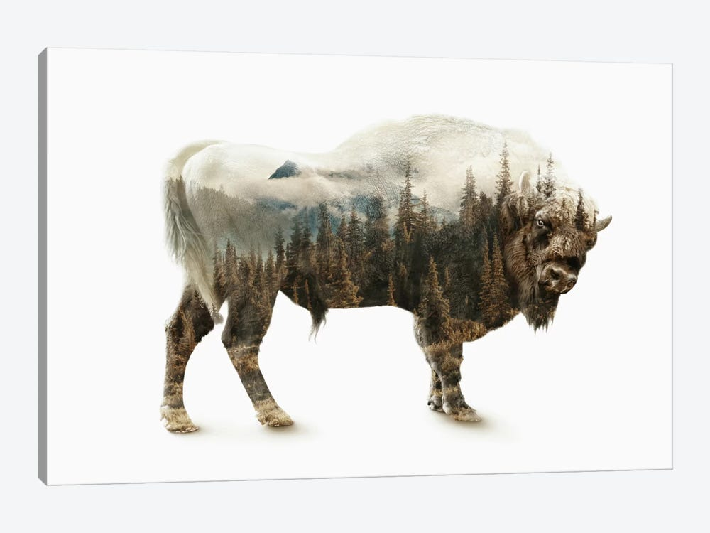 Bison by Riza Peker 1-piece Canvas Wall Art