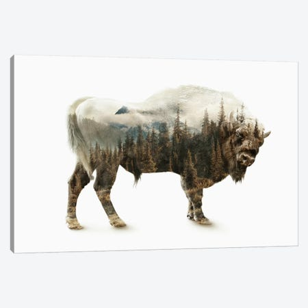 Bison Canvas Print #PEK2} by Riza Peker Canvas Wall Art