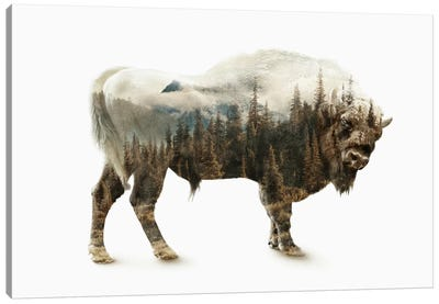 Bison Canvas Print #PEK2