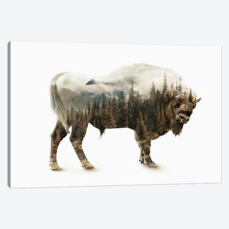 Bison Canvas Print #PEK2} by Riza Peker Canvas Wall Art