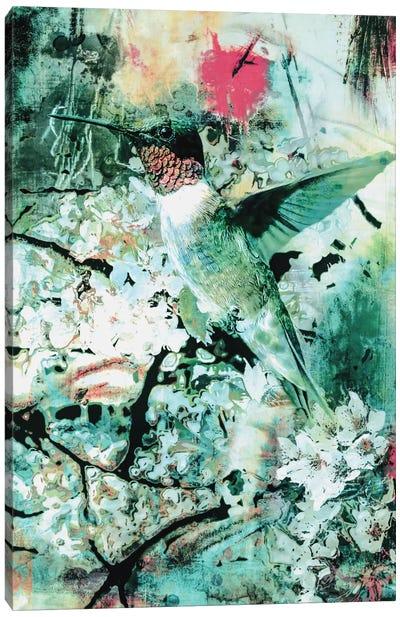 Hummingbird Canvas Print #PEK46