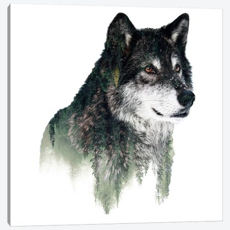 Wolf I Canvas Print #PEK71} by Riza Peker Canvas Print